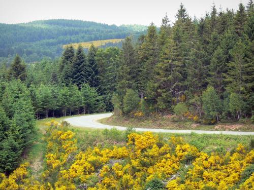 parc-naturel-regional-millevaches-limousin-38509_w500.jpg